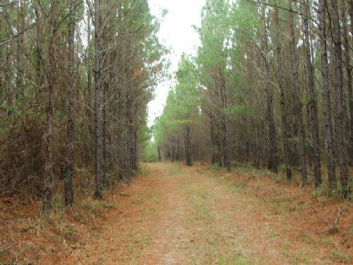 632 Acres Of Timber And Hunting : Tyler : Lowndes County : Alabama