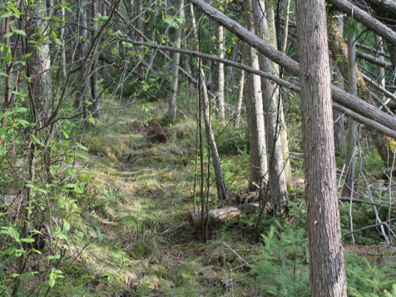 30 Acre Hunting Camp : Atlanta : Montmorency County : Michigan