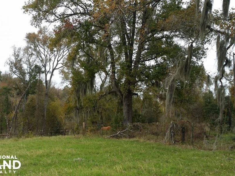 16 Acre Recreational Timberland Tra : Point Blank : San Jacinto County : Texas