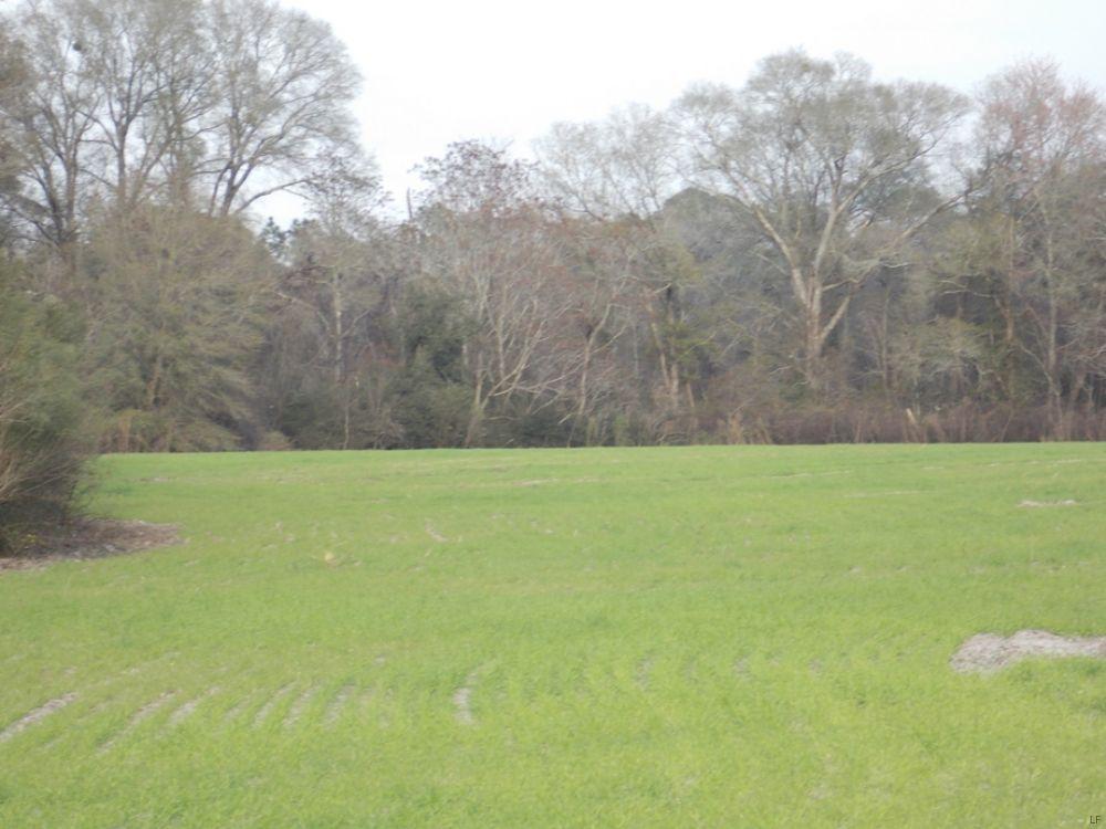 Mini Farm : Baxley : Appling County : Georgia