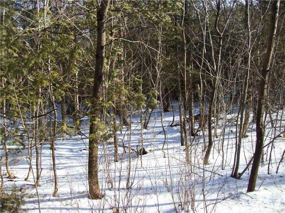Bradford 24 Whitetail Junction : Bradford : Penobscot County : Maine
