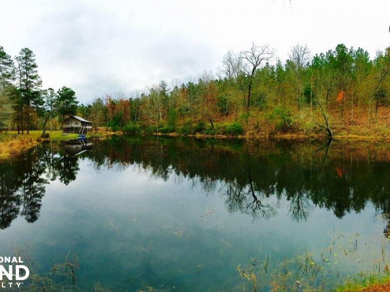 Boyleston Pond Tract : Williston : Barnwell County : South Carolina