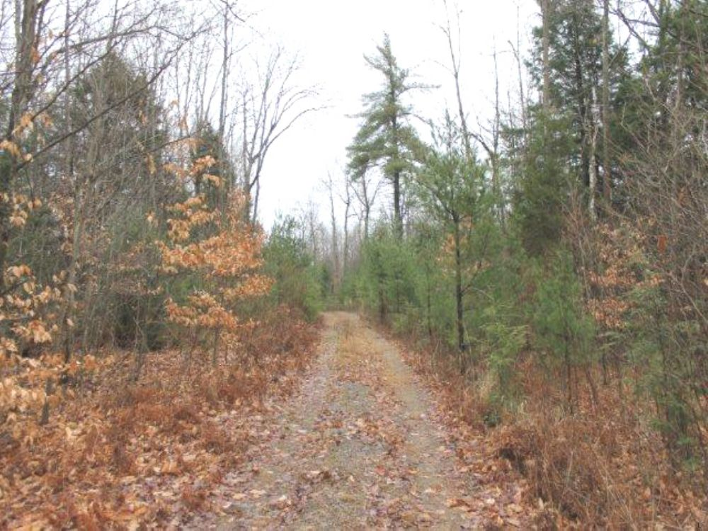 5 Acres Borders State Land Hunting : Diana : Lewis County : New York