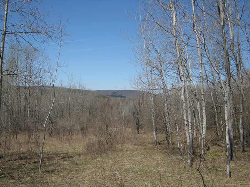 15 Acres Woods Meadows Views : Freetown : Cortland County : New York