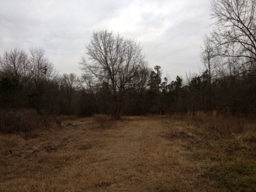 59.79 Acres : Summerton : Clarendon County : South Carolina