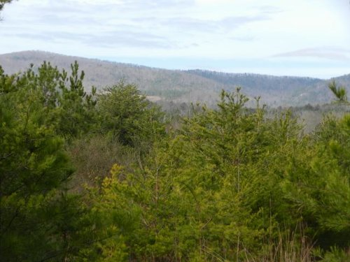 40+/- Acres On Al/ga Line : Piedmont : Cherokee County : Alabama
