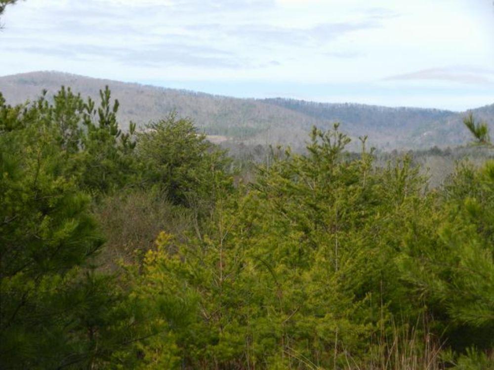 40+/- Acres On Al/ga Line : Piedmont : Cherokee County : Alabama