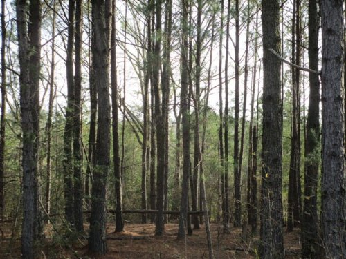40+/- Ac Perfect For Hunting : Troy : Pike County : Alabama