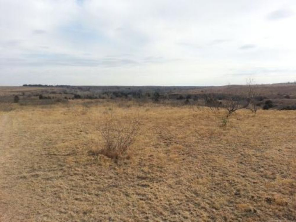 Hunting / Cattle Property : Alanreed : Donley County : Texas