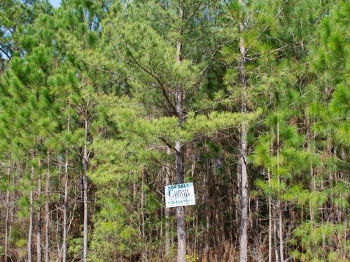 Hughes Tract : Homerville : Clinch County : Georgia