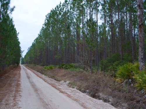 8 Mile Still Road Timber Tract 1 : Homerville : Clinch County : Georgia