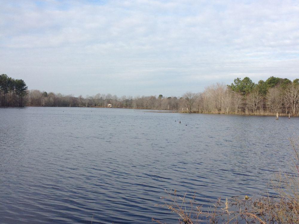 199.65 Acres With Waterfront : Scotland Neck : Halifax County : North Carolina