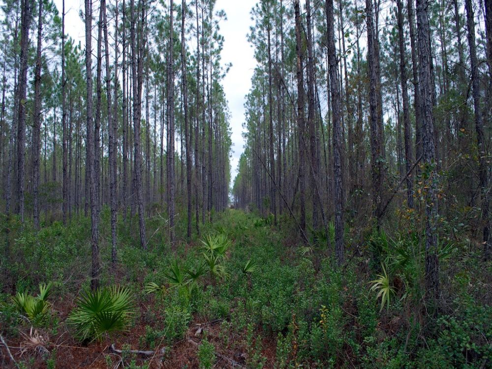 8 Mile Still Road Tract 2 : Homerville : Clinch County : Georgia
