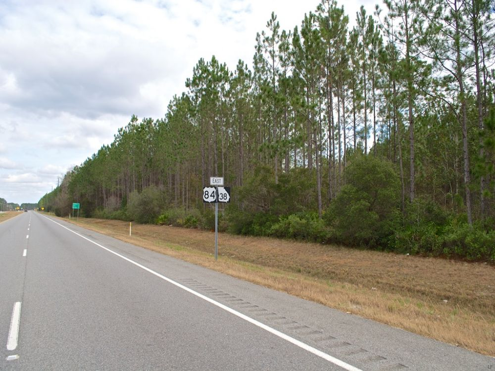 Highway 84 Timber Tract : Homerville : Clinch County : Georgia