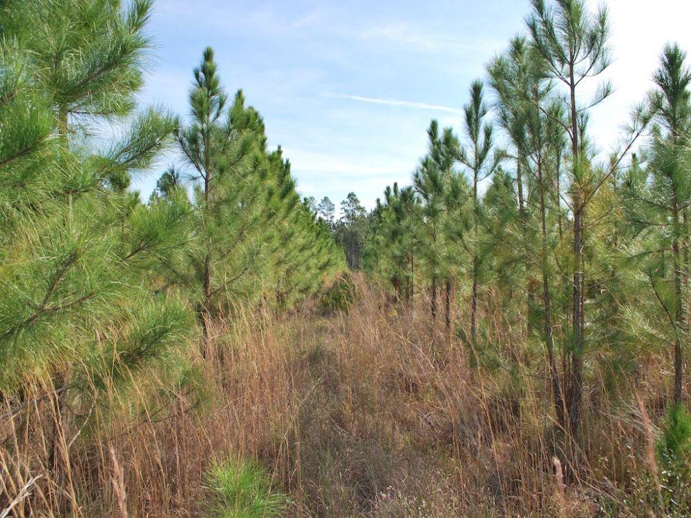 Swamp Road Tract : Waycross : Ware County : Georgia