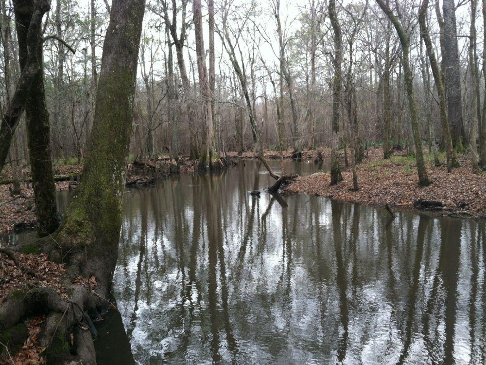 Riverfront Plantation $1,000/ Acre : Wrightsville : Johnson County : Georgia