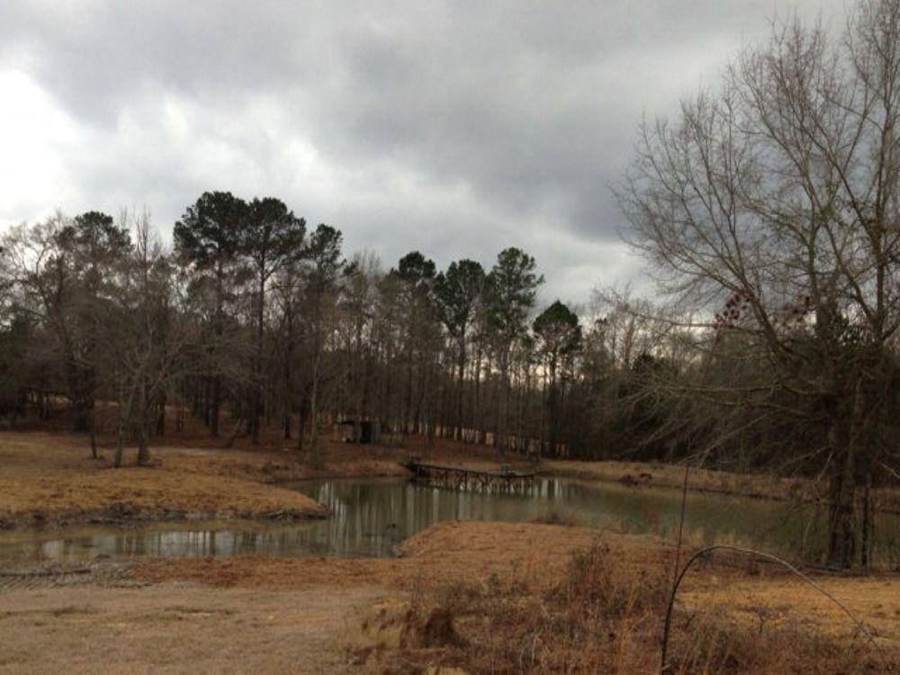 12.5+/- Acres With Pond : Banks : Pike County : Alabama