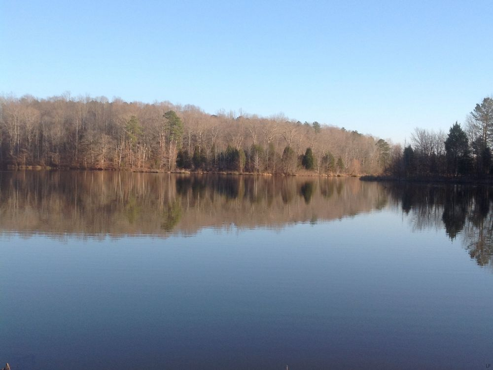256 Acres Lakefront Timberland : Lawrenceville : Brunswick County : Virginia