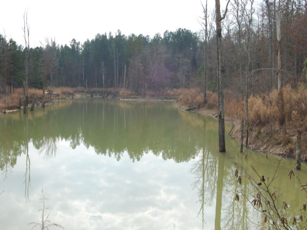 106 Acre Sportsman's Paradise : Union : Union County : South Carolina