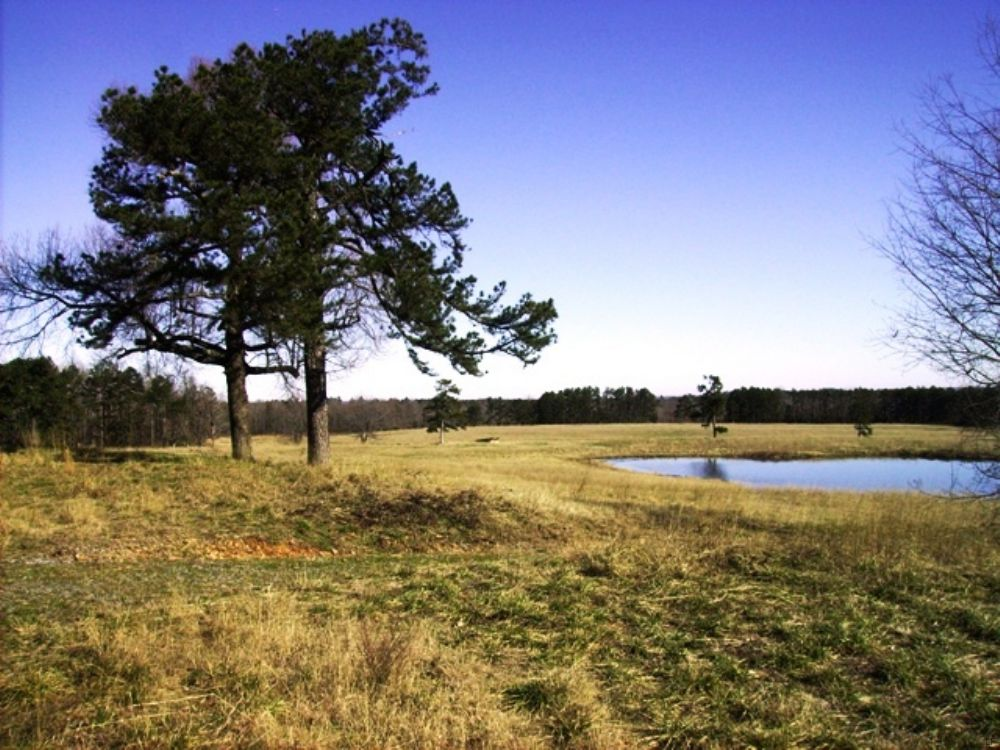 353 +/- Acre Farm / Hunting Land : Clinton : Van Buren County : Arkansas