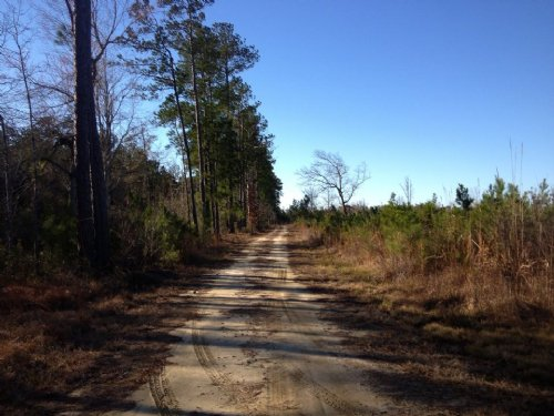 206.5 Acres : Marion : South Carolina
