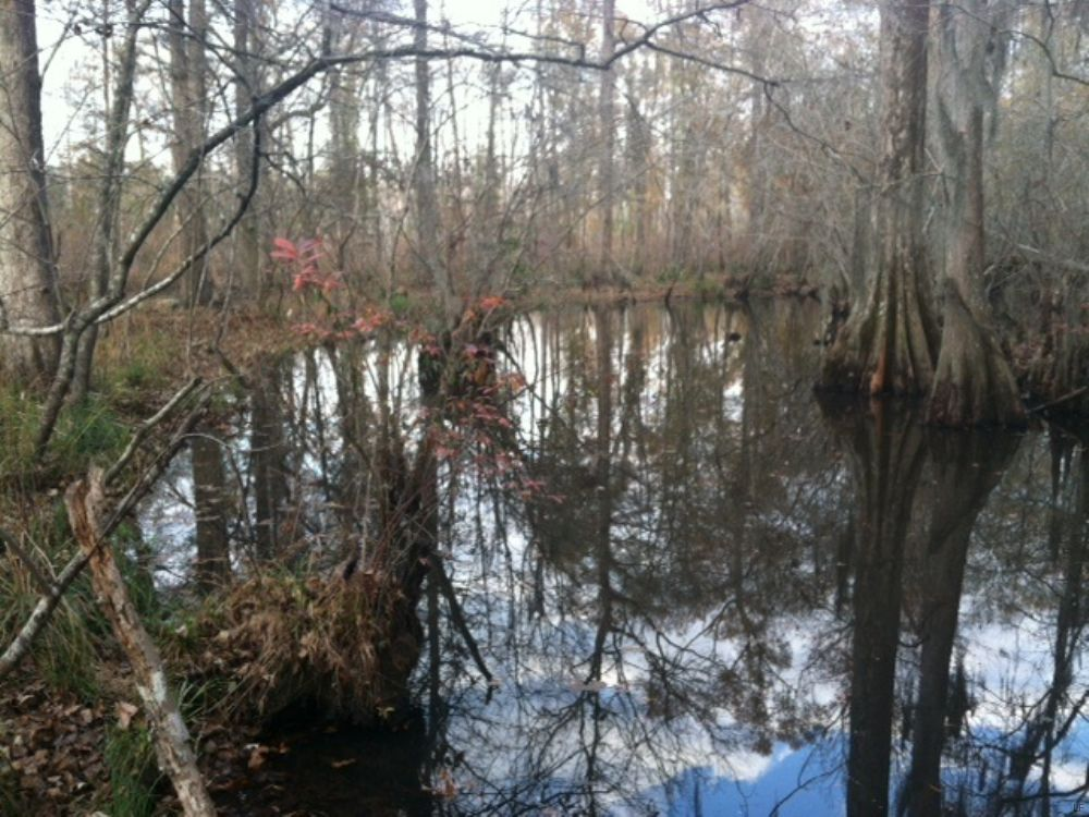 River Frontage, Hunting, And Timber : Wrightsville : Johnson County : Georgia