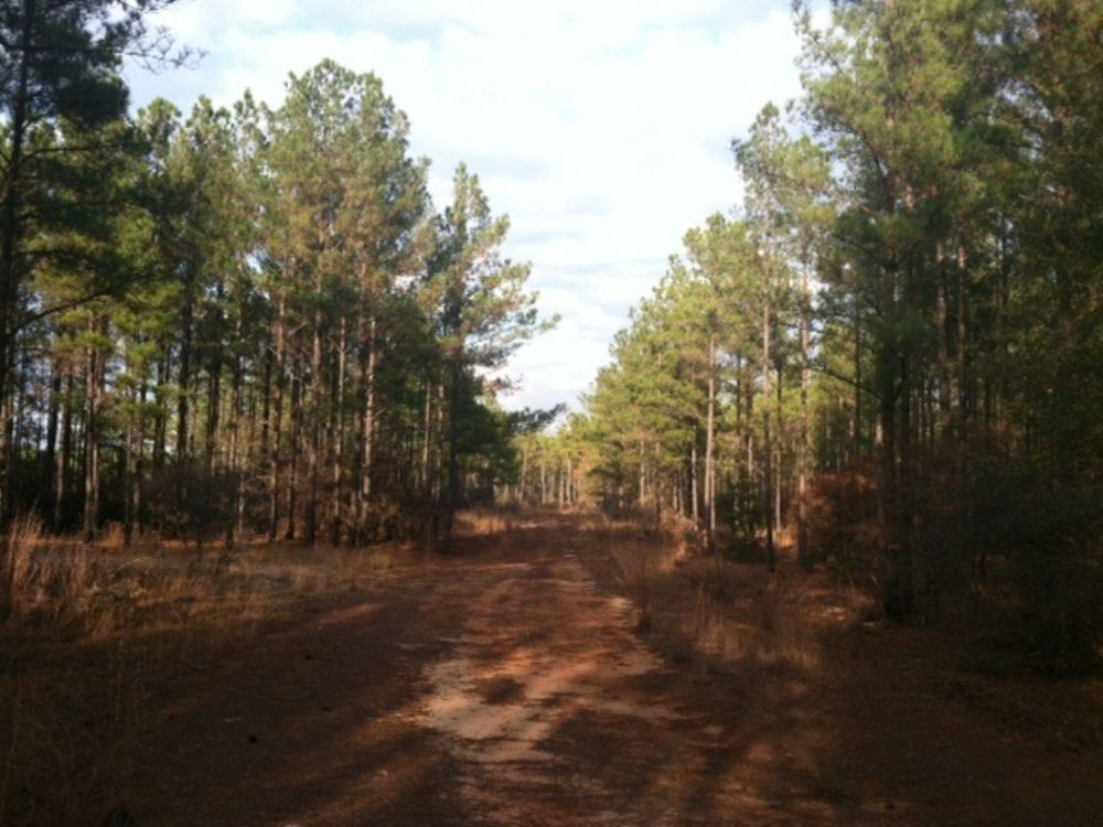 100 Acre Hunting- Owner Financing : Wrightsville : Johnson County : Georgia