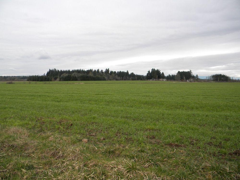 Farmland Near I-5 : Toledo : Lewis County : Washington