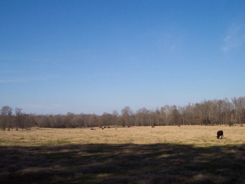 43.77 Ac. Mostly Fenced Pasture (2) : Adairsville : Bartow County : Georgia
