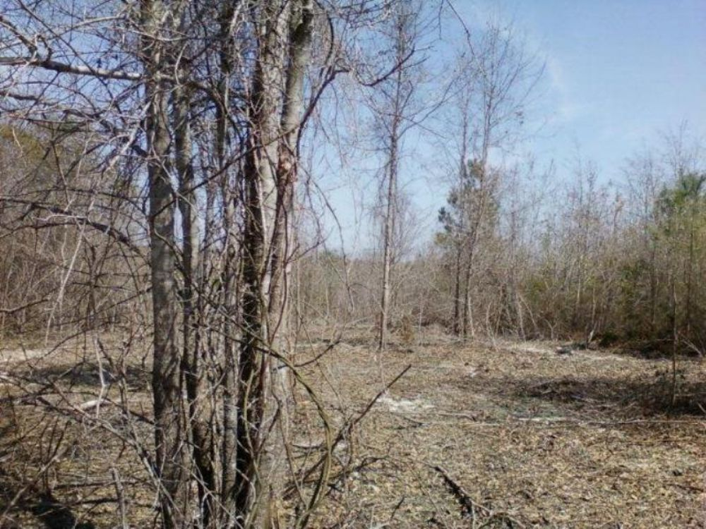 48+/- Ac Of Great Recreation Tract : Luverne : Crenshaw County : Alabama