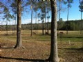 55acres, Pasture/wooded Near I-65