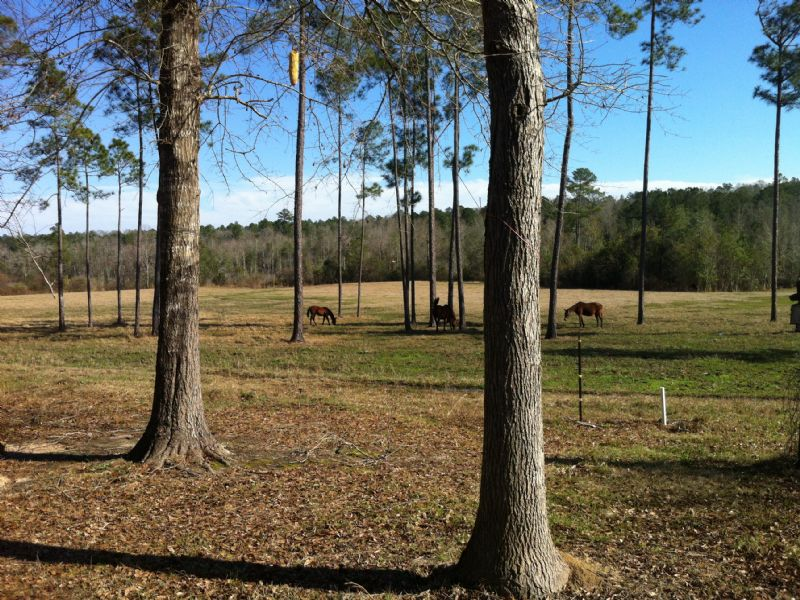 55acres, Pasture/wooded Near I-65 : Atmore : Escambia County : Alabama