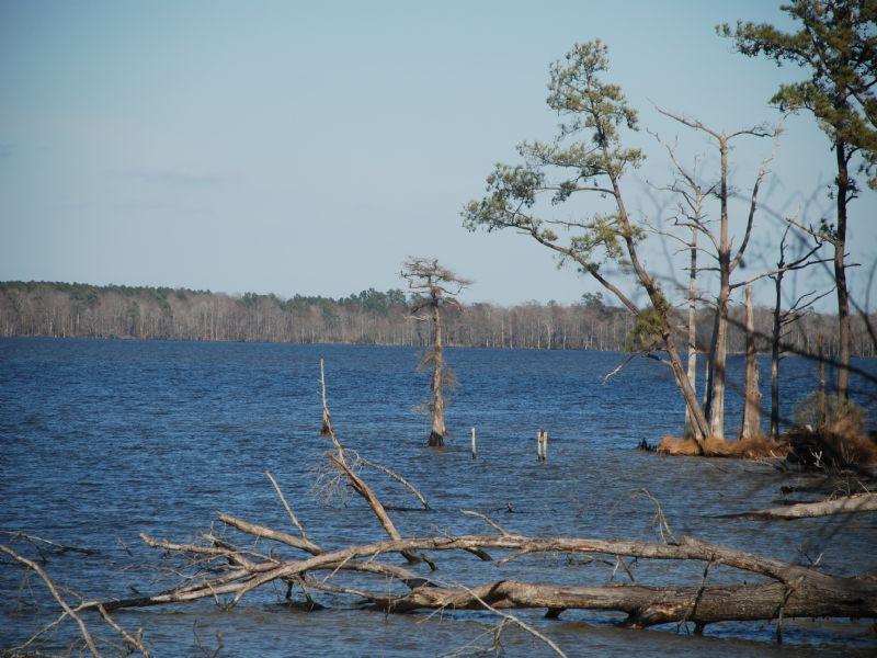 Foreclosure Auction Of 1500 Acres : Hertford : Perquimans County : North Carolina