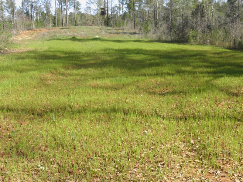 Indian Creek 61 : Newberry : Newberry County : South Carolina