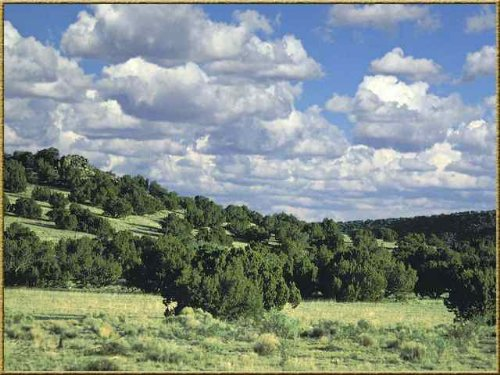 Elk Valley 40 Acre Foreclosure : Saint Johns : Apache County : Arizona