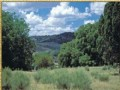 Elk Valley 40 Acre Foreclosure