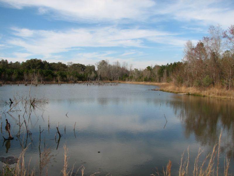 Sharpe Farm : Sylvania : Screven County : Georgia