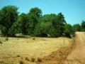Elk Valley Ranch, Arizona 36 Acres