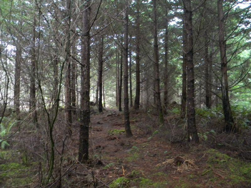 42 Acres Forestland : Pe Ell : Lewis County : Washington