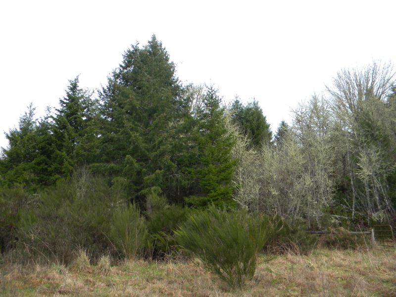 21 Forested Acres : Boisfort : Lewis County : Washington