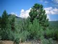 Sierra Verde Ranch Arizona