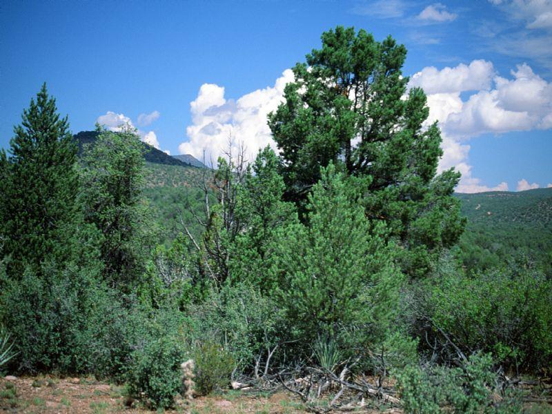 Sierra Verde Ranch Arizona : Seligman : Yavapai County : Arizona