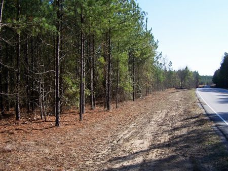 Hunting Land - 61 Ac. Allendale Cty : Allendale : Allendale County : South Carolina