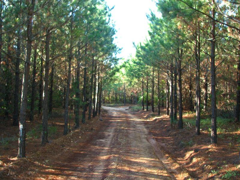 River Pine Tract 5 : Antlers : Pushmataha County : Oklahoma