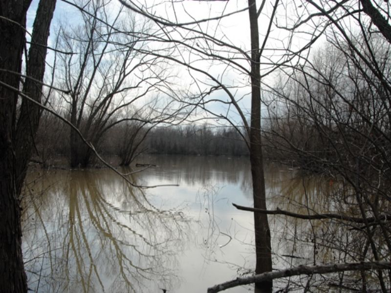 Duck And Deer Hunting Land For Sale : Colt : Saint Francis County : Arkansas