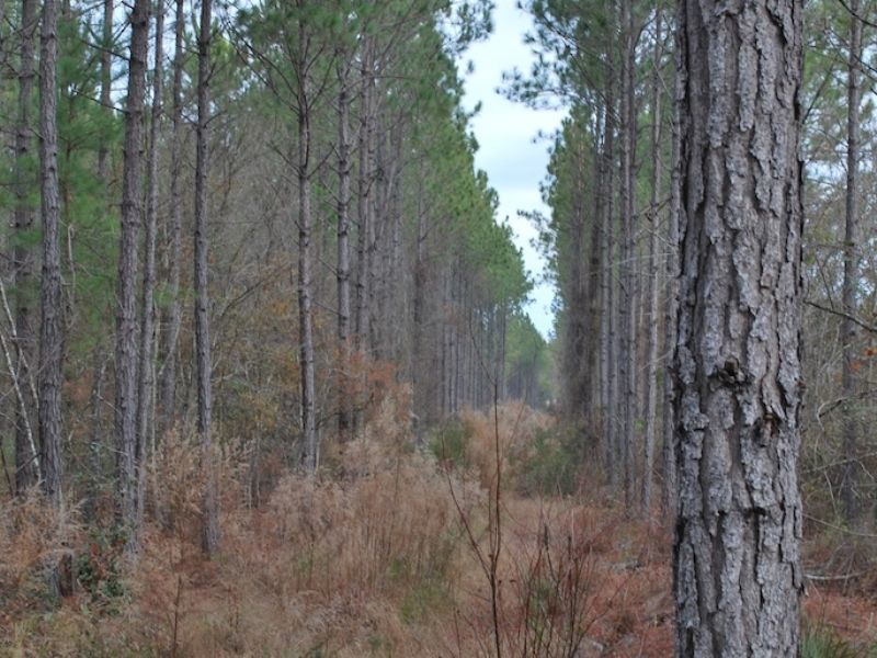 Tippins Tract 4 : Baxley : Appling County : Georgia