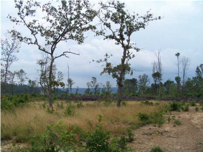 40 Acres +/- Owner Financing : South Pittsburg : Marion County : Tennessee