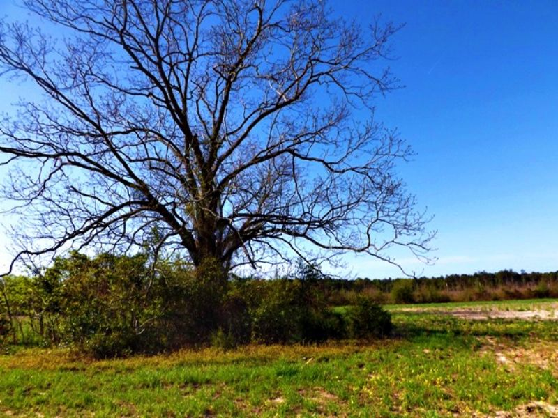 Chapel Hill Farms : Waynesboro : Burke County : Georgia
