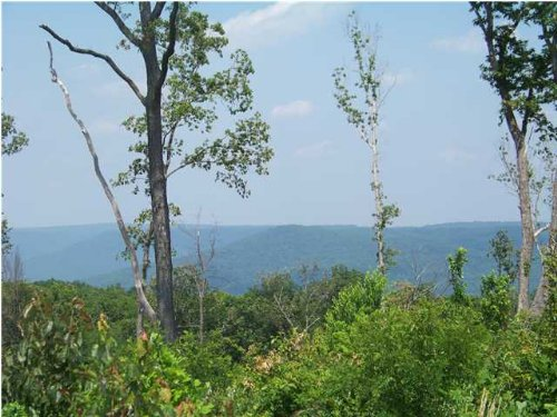 40+/- Acres Owner Financing : South Pittsburg : Marion County : Tennessee