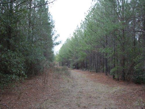Tarpley Rd. Sportsman Tract : Jeffersonville : Wilkinson County : Georgia